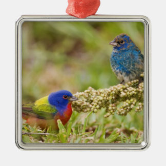 Painted Bunting Passerina citria) adult male 2 Christmas Ornament