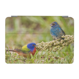 Painted Bunting Passerina citria) adult male 2 iPad Mini Cover