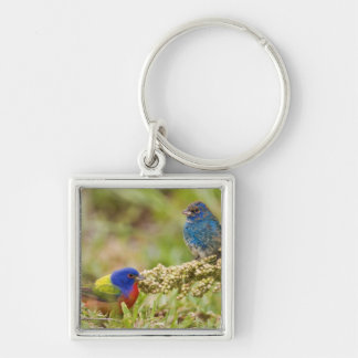 Painted Bunting Passerina citria) adult male 2 Keychains
