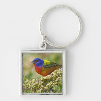 Painted Bunting Passerina citria) adult male Key Ring