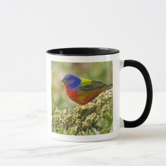 Painted Bunting Passerina citria) adult male Mug