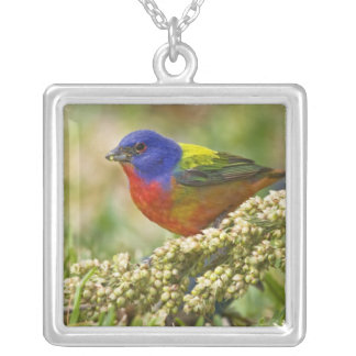 Painted Bunting Passerina citria) adult male Silver Plated Necklace