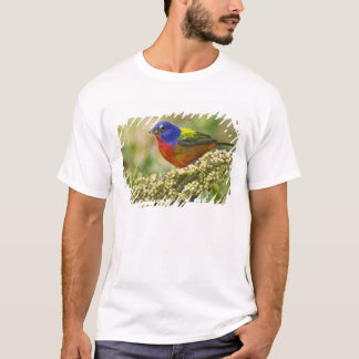 Painted Bunting Passerina citria) adult male T-Shirt