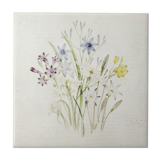 Painted Conanthera Flower Bouquet Vintage Script Tile