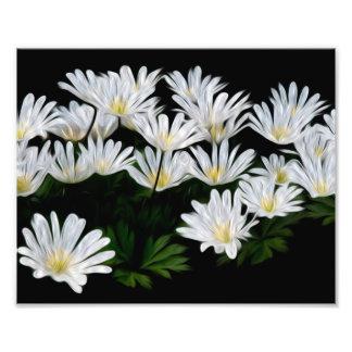 Painted Daisies Photo Art