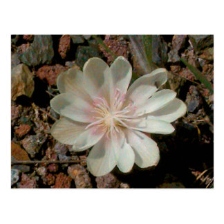 Painted Desert Flower Postcard