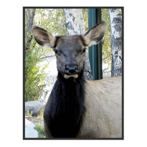 Painted elk portrait postcard