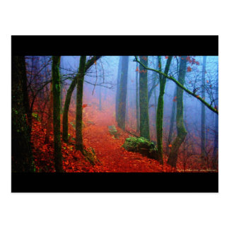 Painted Forest Autumn Blue Fog Postcard