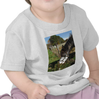 Painted Horse, Eating Queen Ann Lace flower T-shirts