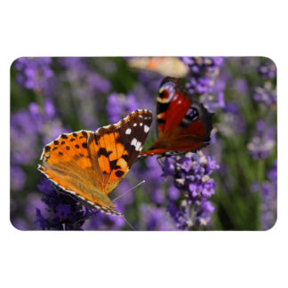 painted lady and peacock butterfly magnet