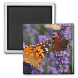 painted lady and peacock butterfly square magnet