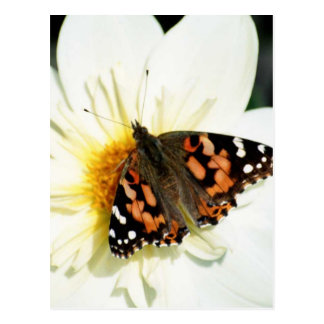 Painted Lady Butterfly (2) Postcard