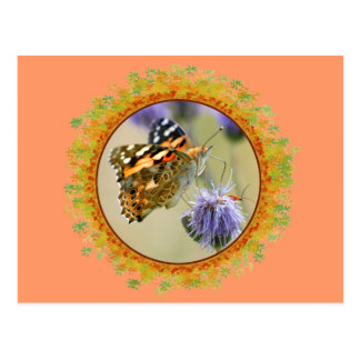 Painted lady butterfly feeding in frame of leaves postcard