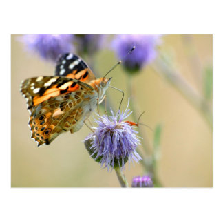 Painted lady butterfly feeding on blue flower postcard