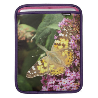 Painted Lady Butterfly, Feminine iPad Sleeve