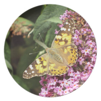 Painted Lady Butterfly, Nature Plate