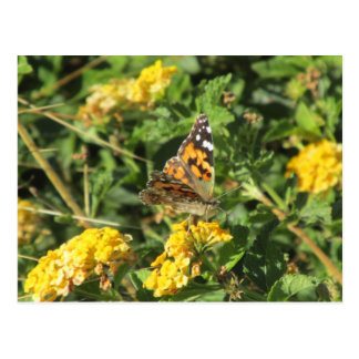 Painted Lady Butterfly on Lantana Blooms Postcard