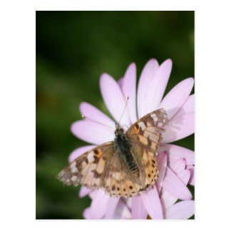 Painted Lady Butterfly on Pink Flower Postcard