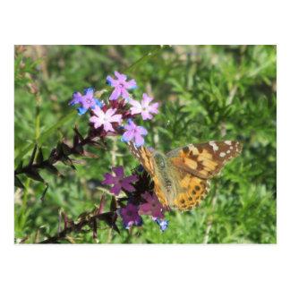 Painted Lady Butterfly on Purple Flowers Postcard