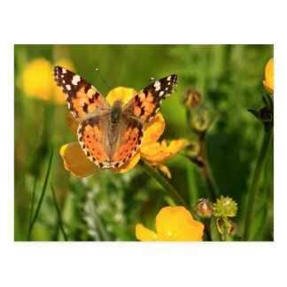 Painted Lady Butterfly Postcard