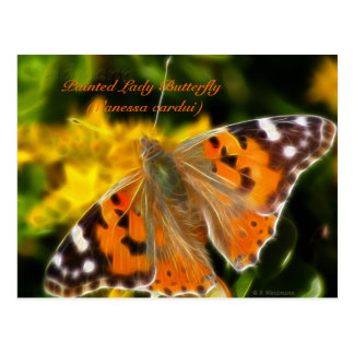 Painted Lady Butterfly (Vanessa cardui) Postcard