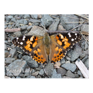 Painted Lady Postcard