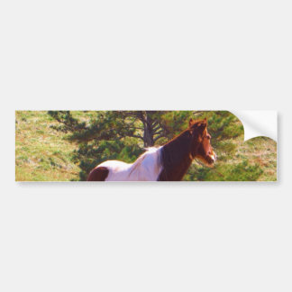 Painted Pony  by the Pine Bumper Sticker