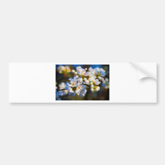 Painted Spring Blooming Bradford Pear Blossoms Bumper Sticker