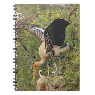Painted Stork & youngones,Keoladeo National Notebook