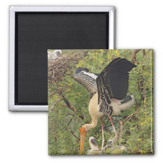 Painted Stork & youngones,Keoladeo National Square Magnet