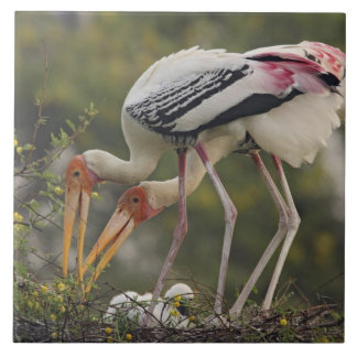 Painted Storks & youn one at nest,Keoladeo Large Square Tile