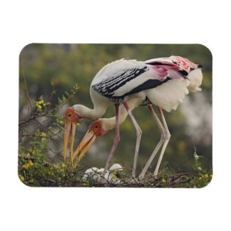 Painted Storks & youn one at nest,Keoladeo Rectangular Photo Magnet