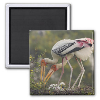 Painted Storks & youn one at nest,Keoladeo Square Magnet