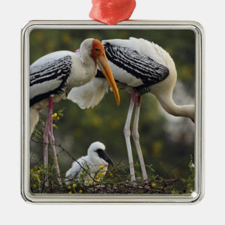 Painted Storks & young one at nest,Keoladeo Christmas Ornament