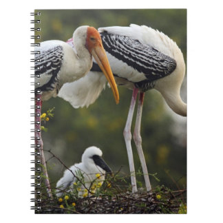 Painted Storks & young one at nest,Keoladeo Notebook