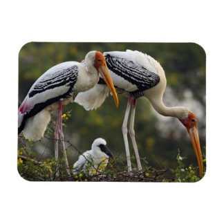Painted Storks & young one at nest,Keoladeo Rectangular Photo Magnet