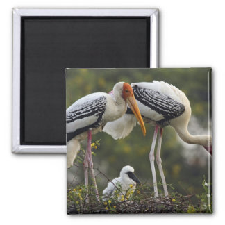 Painted Storks & young one at nest,Keoladeo Square Magnet