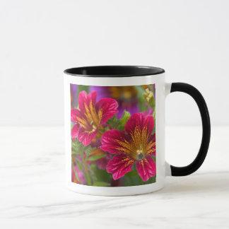Painted tongue close-ups of their blooms - mug