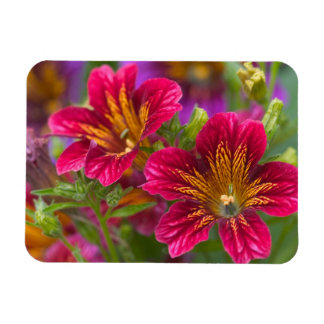 Painted tongue close-ups of their blooms - rectangular photo magnet