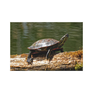 Painted Turtle on a Log Canvas Print