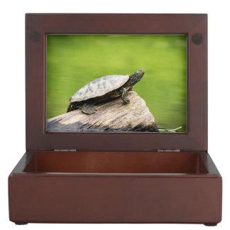 Painted Turtle on a log Keepsake Box