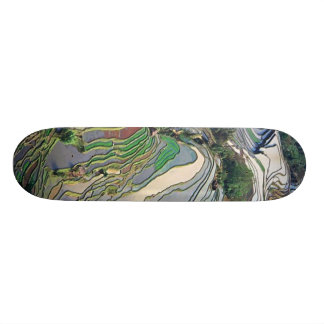 painted turtle skateboard decks