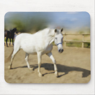 PAINTED WHITE HORSE MOUSE PAD