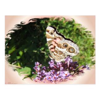 Paintedlady butterfly 47 postcard