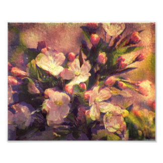 Painterly Image of Crabapple Blossom Photo Print