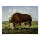 Painting of a Hereford bull Poster