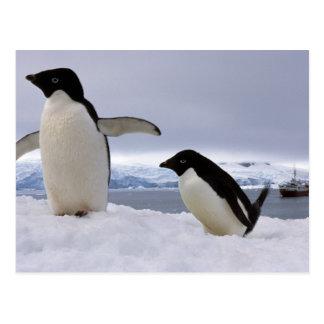 Pair Adelie penguins Antarctica Postcard