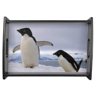 Pair Adelie penguins Antarctica Serving Tray