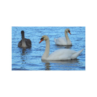 Pair of Adult Swans with Juvenile Canvas Print