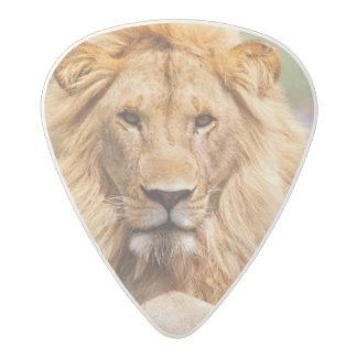 Pair of African Lions, Panthera leo, Tanzania Acetal Guitar Pick